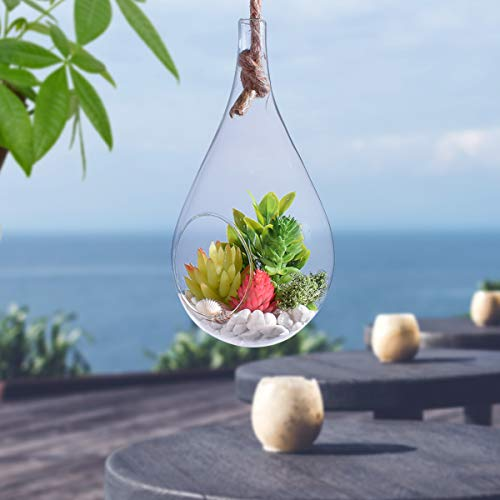Teardrop glass terrarium for plants