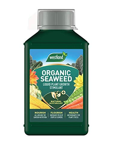 Westland Horticulture 20100443 Organic Seaweed Plant Growth Stimulant Liquid Plant Food 1L