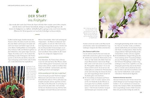 Mein City-Obstgarten: Fruchtiges Naschvergnügen für Balkon & Terrasse (GU Garten Extra) - 6
