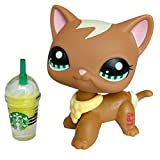 Gigi lps Short Hair Cat #1170 Brown and Blue Eyes Kitty with lps Accessorie Coffee Collars Kids Collectable Figures Kids Gift