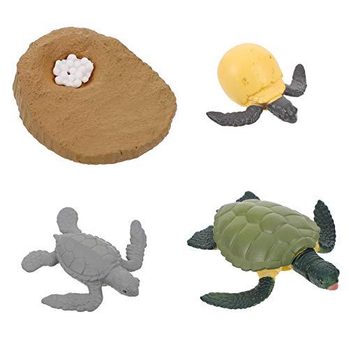 Cabilock 4 Piezas de Plástico de Figuras de Tortuga de Ciclo de Vida Conjunto de Tortuga Realista de Mar de Juguete de La Figura de Tortuga Juguetes Educativos de La Ciencia de Los