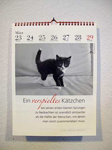 Der literarische Katzenkalender 2020 - 3