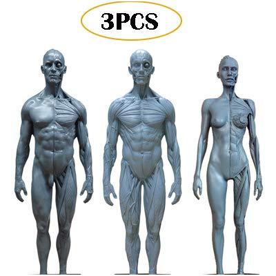 Menselijke Anatomie Figuur Model - PU materiaal Female & Mannelijke Anatomie figuur & Male Muscle Bone Model - 11 Inch Menselijk skelet Anatomisch Painting - voor referentiematerialen voor Kunstenaars