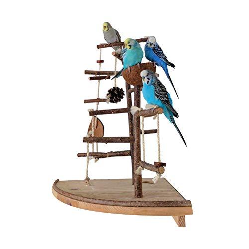 Vogelgaleria Premium Vogelspielplatz groß für die Wand-Montage | 2 abnehmbare Natur Kletterbäume aus Holz, Kokosnuß Futternapf, Schaukel | Ideales Vogelzubehör für Wellensittiche Nymphensittich