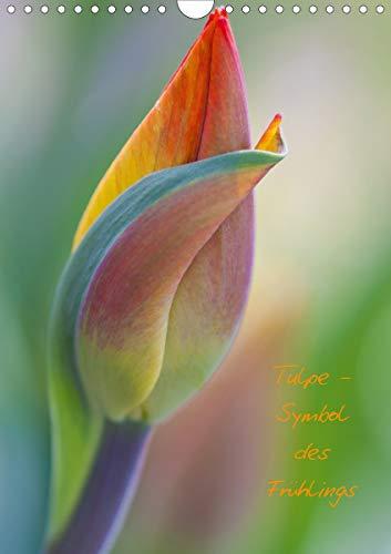 Tulpe - Symbol des Frühlings (Wandkalender 2021 DIN A4 hoch)