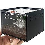 niyin204 Insecte Terrarium - Caja de alimentación para araña, Lagarto, críquet y guardián de...
