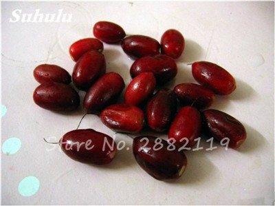 Miraculine fruits tropicaux Graines rares Graines Plantes de Cajou Jardin potager Bonsai Pot Fleurs 20 Pcs 12
