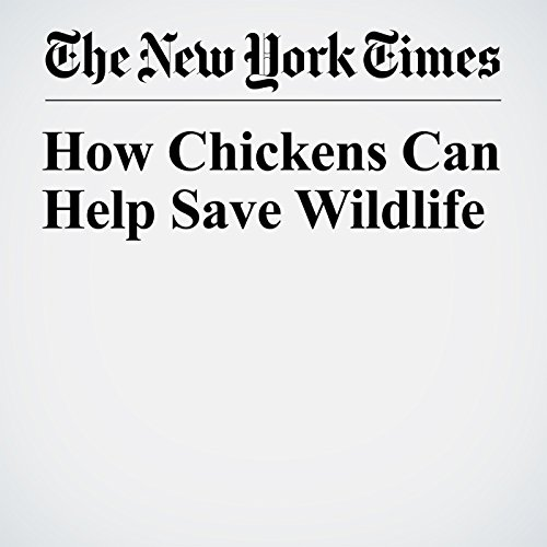 How Chickens Can Help Save Wildlife audiobook cover art