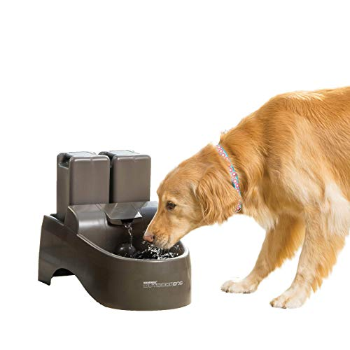 Best Fish Fountain for Fishs That Tip Over Water Bowls