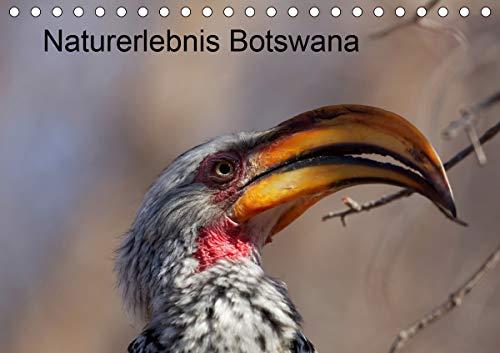 Naturerlebnis Botswana (Tischkalender 2021 DIN A5 quer)