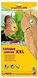 sera Catappa Leaves XXL 30-35cm 10pcs