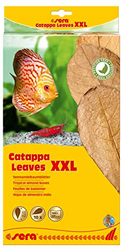 sera Catappa Leaves XXL 30 – 35 cm 10 St.