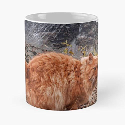 Mountain Lion In Bulgaria Classic Mug