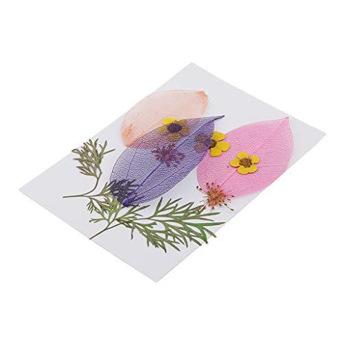 P Prettyia 10 Teile/Paket Getrocknete Gepresste Blätter Blumen Für DIY Scrapbooking Kunsthandwerk