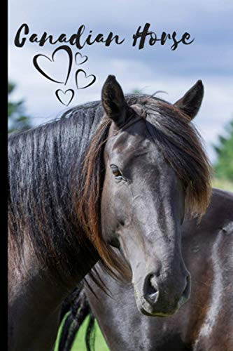 Canadian Horse Notebook For Horse Lovers: Composition Notebook 6x9' Blank Lined Journal