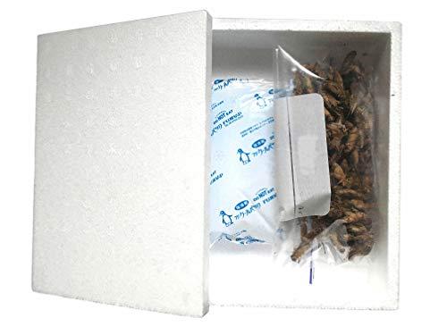 冷凍コオロギ餌用(国産イエコ)Lサイズ100g(約240匹相当)ネイトファームのヨーロッパイエコは新鮮急速冷凍