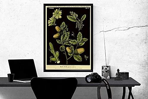 MG global Póster de pared alemán de quercus Suber botánica de quercus suber de bellota ilustración de ciencias de corcho, roble de corcho, educativa de cocina, sin marco
