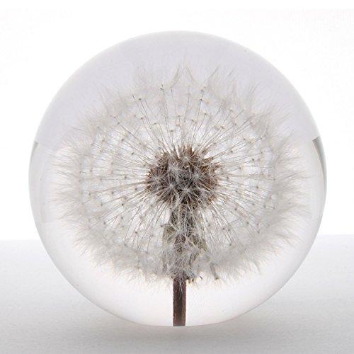 Briefbeschwerer Pusteblume (Dandelion), groß