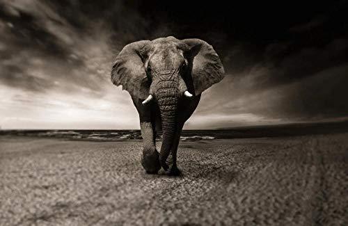 WZXHN Puzzle Adultos Rompecabezas Elefante Blanco y Negro Animal Africa Safari Rompecabezas de Juguete-1000 Piezas