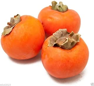 Best japanese persimmon japanese fruit Reviews