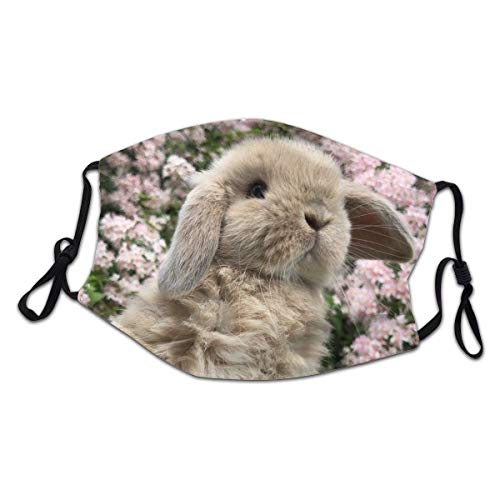 Face Mask Holland Lop Rabbit Flower Reusable Washable For Teenager Children Cloth Dust Face Cover Shield Balaclava Outdoor Sports Black