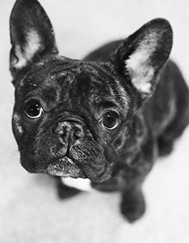 French Bulldog Gifts For Dog Lovers, Dog Portrait Poster Canvas Prints Various Sizes, French Bulldog Lover Gifts, Black and White Dog Wall Art Gift For Bulldog Owner