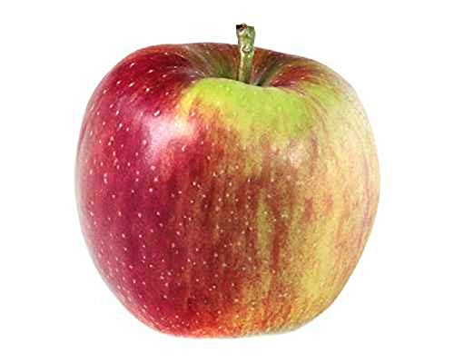 Malus Domestica Roter Boskoop 120 cm Apfelbaum - Apfel Roter Boskoop