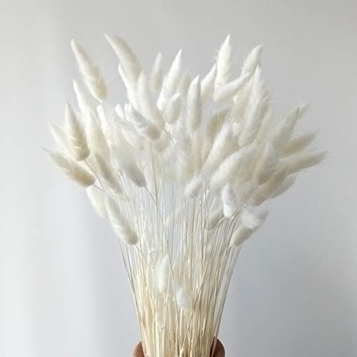 Dried Natural Lagurus Ovatus Bunches, Hare's Tail Grass,50cm Length for...