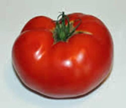 Tomatensamen, Rutgers Tomate, Erbstück, organisch, 25 Samen