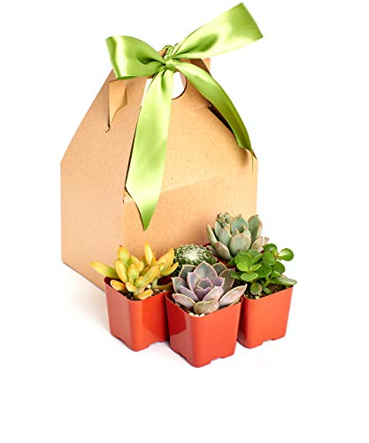 Shop Succulents Unique Collection of Live Hand Selected for Health, Size | Mini Succulents in Gift Box, Love You a Bunch
