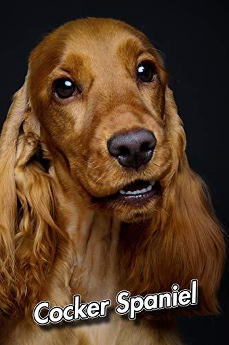 Cocker Spaniel: Weekly Calendar July 2019 - December 2021 | 30 Months | 131 pages 6 x 9 in. | Planner | Diary | Organizer | Agenda | Appointment | To-Do Soft Cover