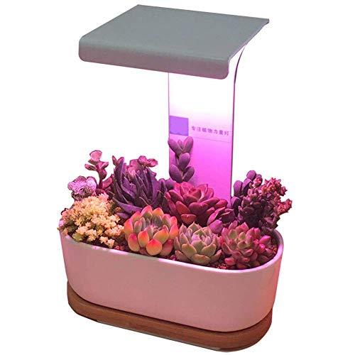 La luz de relleno llevada suculenta del color del espectro lleno de la lámpara del crecimiento de la planta puede atenuar el hogar interior