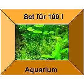 Mühlan Topartikel 5 Töpfe + 5 Bund Wasserpflanzen, Aquarienpflanzen