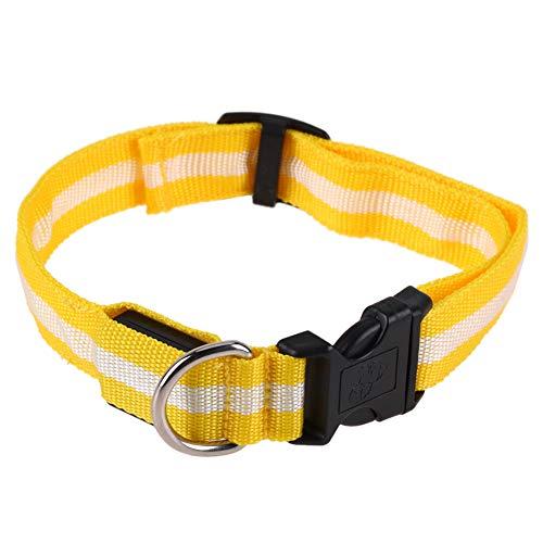 LMD Collar para perro con luz impermeable, 2,5 cm brillante para seguridad nocturna, alta visibilidad, corte súper brillante, ajuste universal, para perros pequeños, medianos y grandes