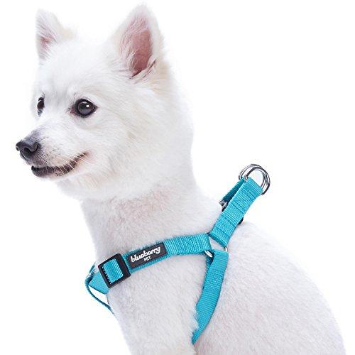 Blueberry Pet Step-In Geschirre Klassisch Einfarbig Hundegeschirr mit Zugentlastung Verstellbar Langlebig - Türkis Nylon 67-98cm Brust, Passender Hundehalsband & Hundeleinen erhältlich Separate