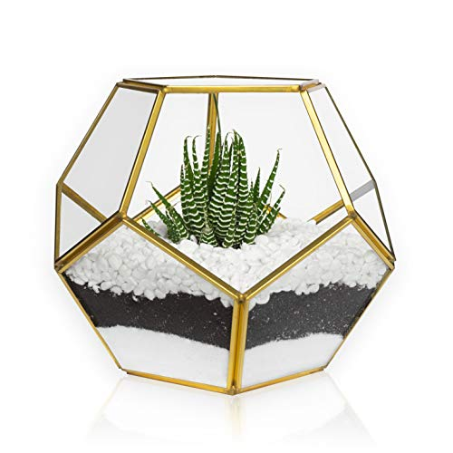 Gold sphere gold terrarium