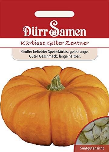 """Dürr-Samen - 8 x Kürbis """"Gelber Zentner"""" Saatgut für Garten, Hochbeet & Gewächshaus - Gemüse Kürbissamen für Gemüsegarten zum Pflanzen - Kürbispflanzen Samen Saat zum Anbauen & Einpflanzen"""