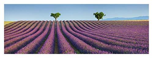 Oeuvres Italia Champ de Lavande, Provence, France-Papier Art-38\