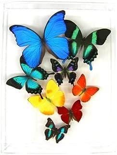 Real 3D Butterfly Art – Flight of 8 Rainbow - (10