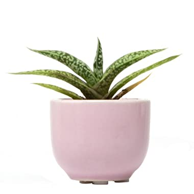 Chive - Succulent Cup, Ceramic Flower Vase, Air Plant and Succulent Holder, in Lilac