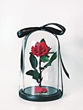 Best beauty and the beast enchanted rose for sale Reviews
