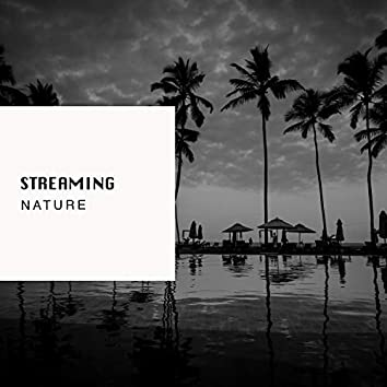 # 1 Album: Streaming Nature