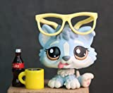 TTtoy lps Baby Husky 1683, Blue Husky Puppy with Brown Eyes Tougue Out Figures with lps Accessories Drinks