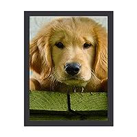 INOV ゴールデン リトリーバー 小犬 アートパネル 壁掛け インテリア アートフレーム おしゃれ 絵画 額入り ブラックフレーム付き 部屋 壁面 30x40cm