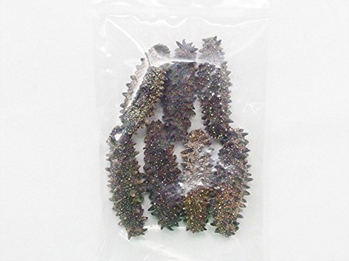 乾燥ナマコ A級品 50g (Aランク) 北海道産乾燥なまこ 金ん子 (中華高級食材) 干し海鼠 北海キンコ 海参 海参皇 干しなまこ (干しナマコ)
