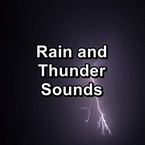 Rain Storm Sounds, The Rain Library & Heavy Rain Sounds