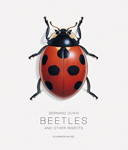 Beetles and Other Insects