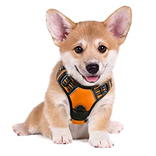 """rabbitgoo Dog Harness,No-Pull Pet Harness with 2 Leash Clips,Adjustable Soft Padded Dog Vest,Reflective No-Choke Pet Oxford Vest with Easy Control Handle for Small Breed,Orange (S, Chest 15.7-27.6"""") (B01MEG2Q7P) 
