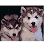 Husky Husky Animal DIY Digital Painting by Numbers...