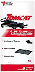 top 10 mouse traps Tomcat Glue mouse size trap, eugenol to increase stickiness, trap mouse, etc …